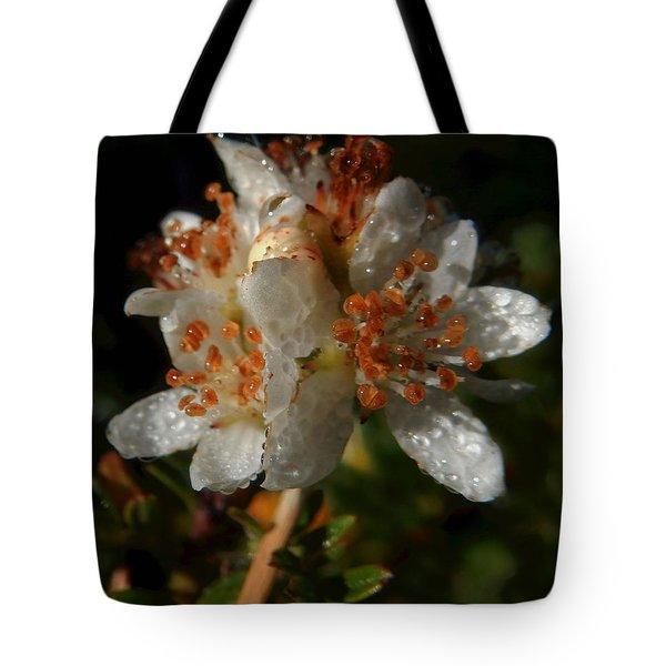 Morning Dew Tote Bag by Pamela Walton