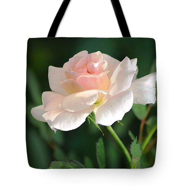 Morning Has Broken Tote Bag by Living Color Photography Lorraine Lynch