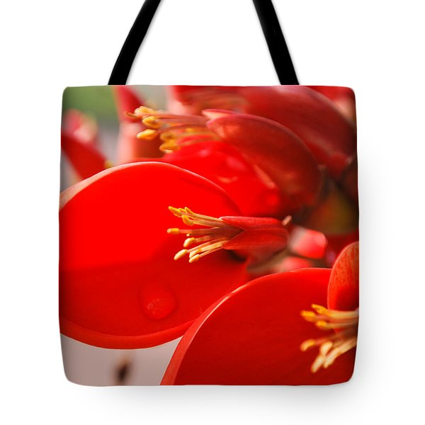 Tote Bag featuring the photograph Morning Jog by Miguel Winterpacht