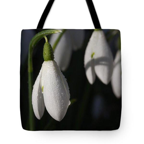 Morning Snowdrops Tote Bag