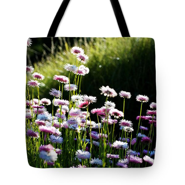 Tote Bag featuring the photograph Morning Sun by Yew Kwang