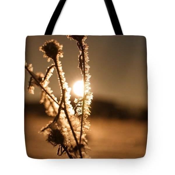 Tote Bag featuring the photograph Morning Walk by Miguel Winterpacht
