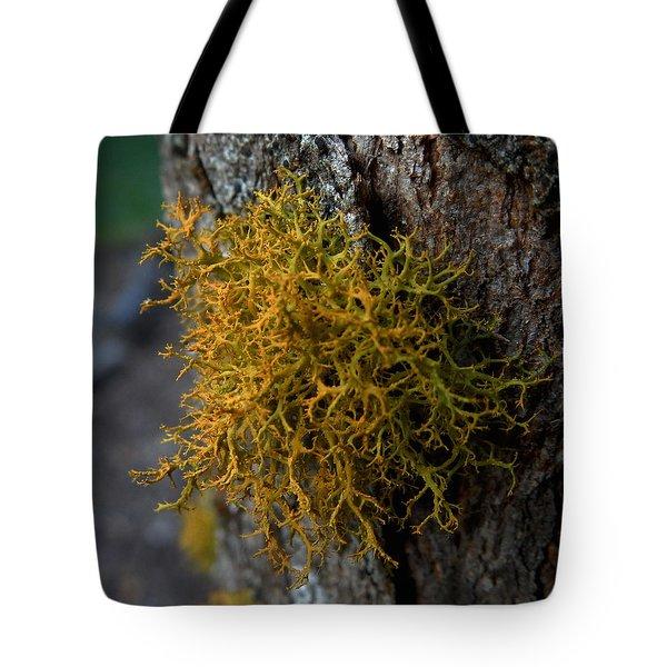 Moss On Tree Tote Bag by Pamela Walton