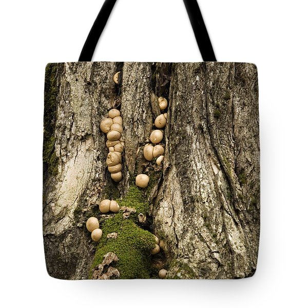 Tote Bag featuring the photograph Moss-shrooms On A Tree by Carol Lynn Coronios