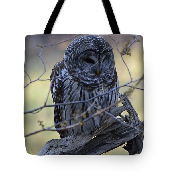 Mostly Awake Tote Bag by Randy Bodkins