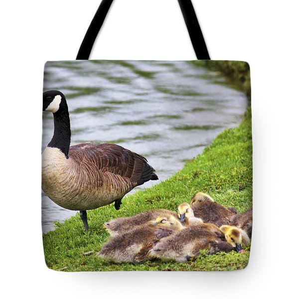 Mother With Goslings Tote Bag by Jason Politte