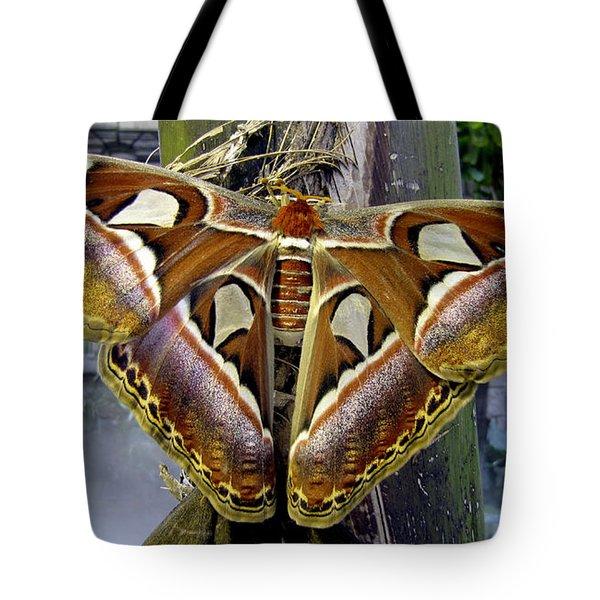 Atlas Moth Tote Bag