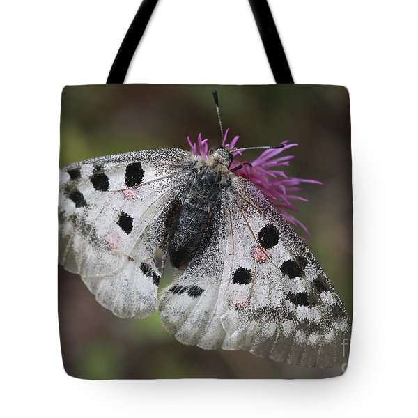 Mountain Apollo Parnassius Apollo Tote Bag by Amos Dor