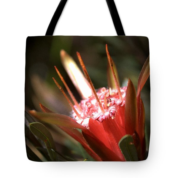 Tote Bag featuring the photograph Mountain Devil by Miroslava Jurcik