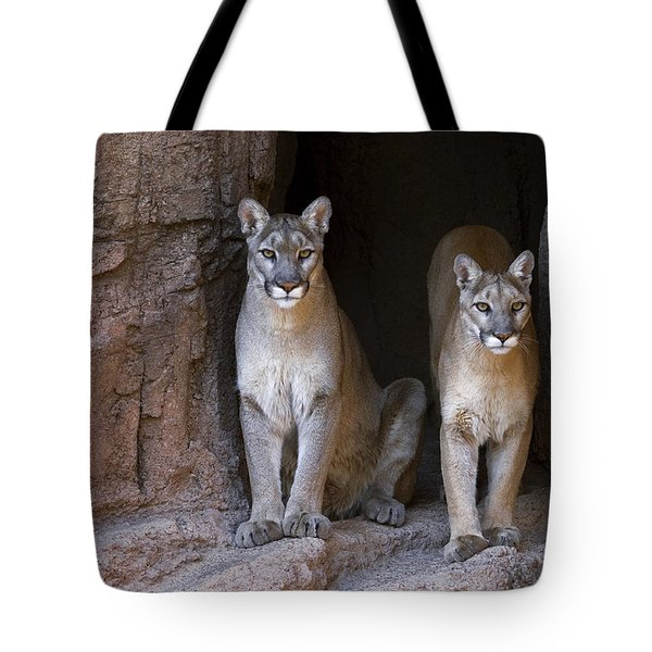 Tote Bag featuring the photograph Mountain Lion 2 by Arterra Picture Library