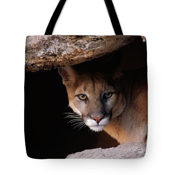 Mountain Lion Peering From Cave Tote Bag
