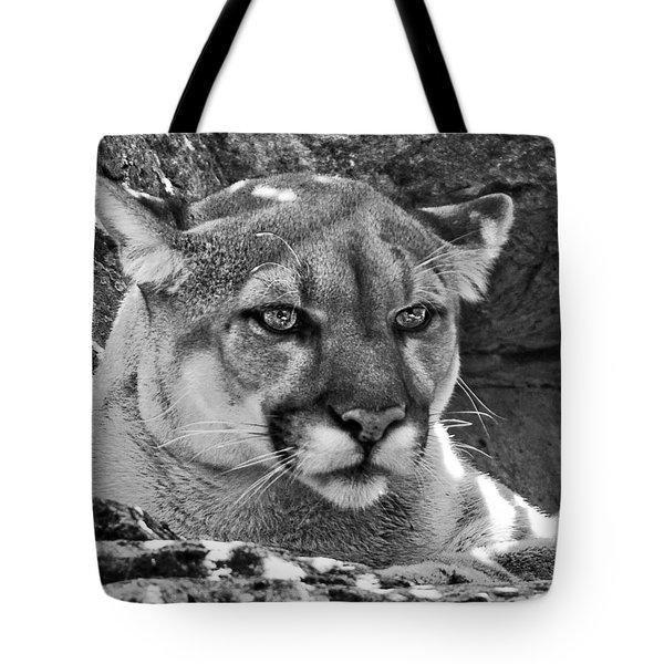 Mountain Lion Bergen County Zoo Tote Bag