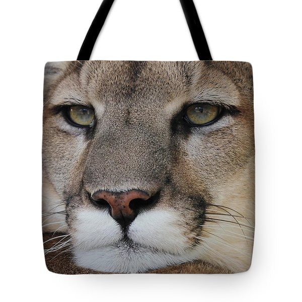 Mountain Lion Portrait 2 Tote Bag