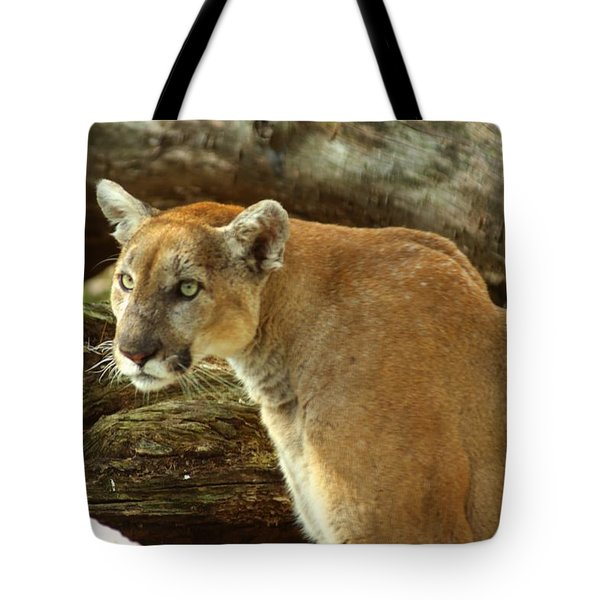 Mountian Lion Tote Bag by Donald Williams