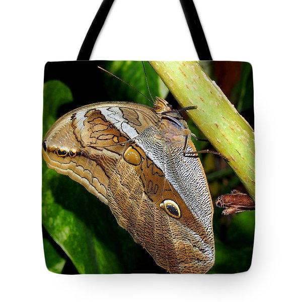 Tote Bag featuring the photograph Mournful Owl Butterfly by Amy McDaniel