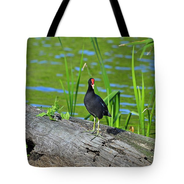 Mouthy Moorhen Tote Bag by Al Powell Photography USA