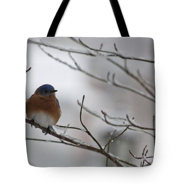 Mr Bluebird Tote Bag by Teresa Mucha