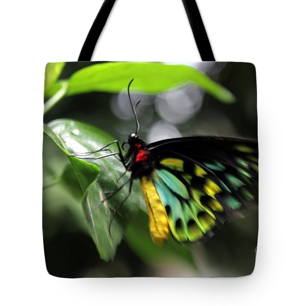 Tote Bag featuring the photograph Mr. Cairns Birdwing by Mary Lou Chmura
