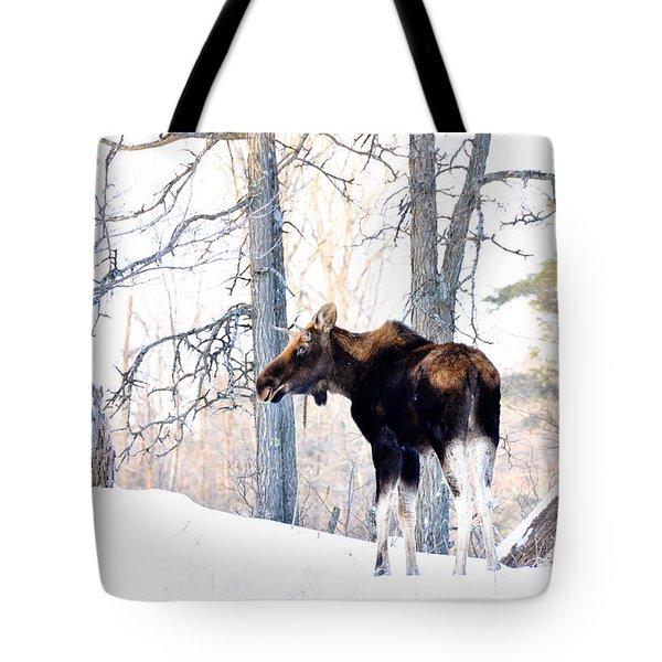 Mr. Moose Tote Bag by Cheryl Baxter
