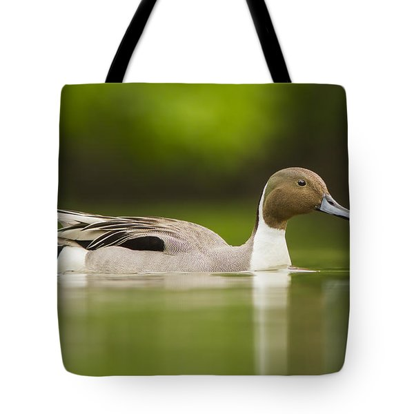 Mr Pintail  Tote Bag by Mircea Costina Photography