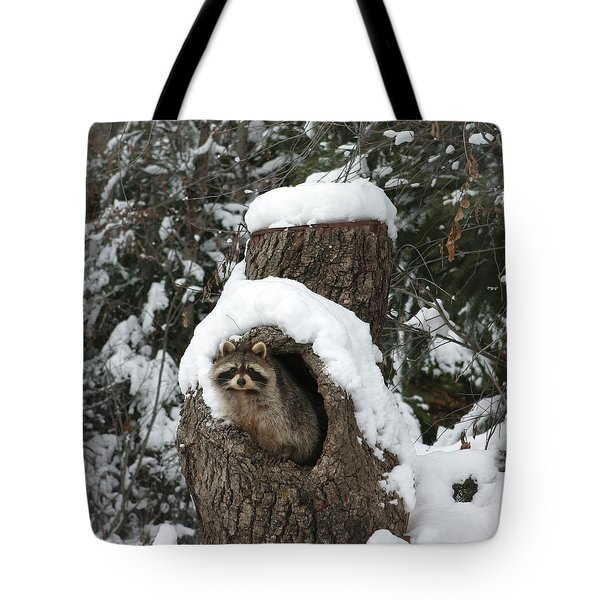 Mr. Raccoon Tote Bag by Diane Bohna