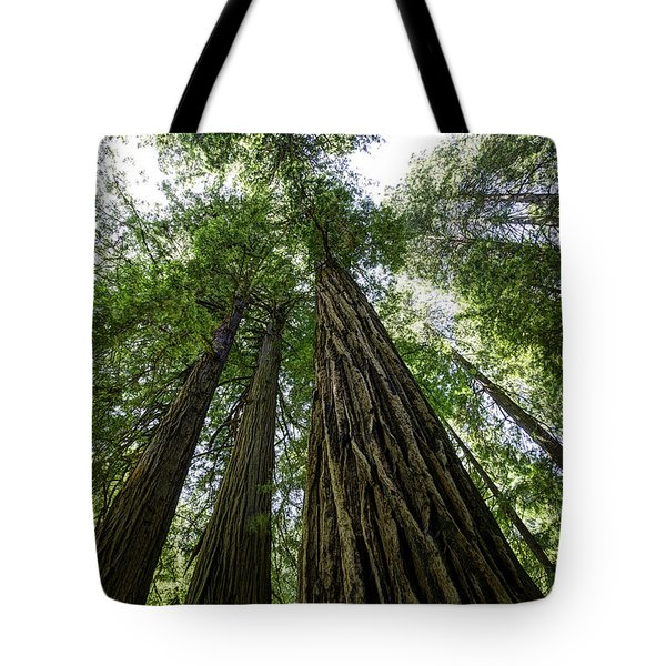 Muir Woods I Tote Bag