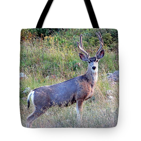 Mule Deer Buck Tote Bag by Karen Shackles