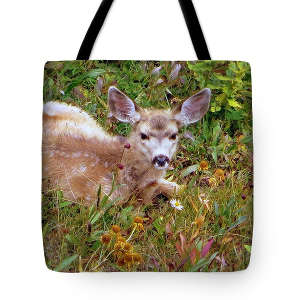 Mule Deer Fawn Tote Bag by Karen Shackles
