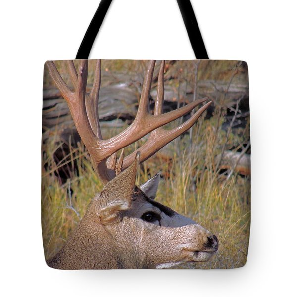 Tote Bag featuring the photograph Mule Deer by Lynn Sprowl