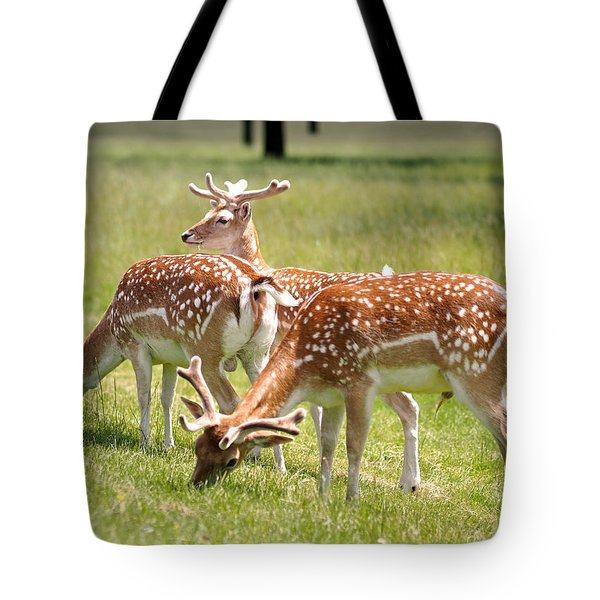 Tote Bag featuring the photograph Multitasking Deer In Richmond Park by Rona Black