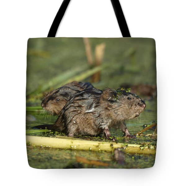 Tote Bag featuring the photograph Munchkins by James Peterson