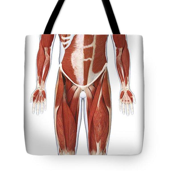 Muscular System, Illustration Tote Bag