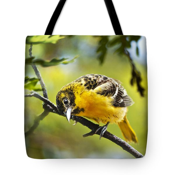 Musing Baltimore Oriole Tote Bag by Christina Rollo