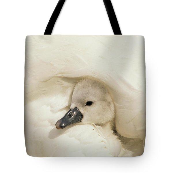Mute Swan Cygnus Olor Cygnet Tote Bag