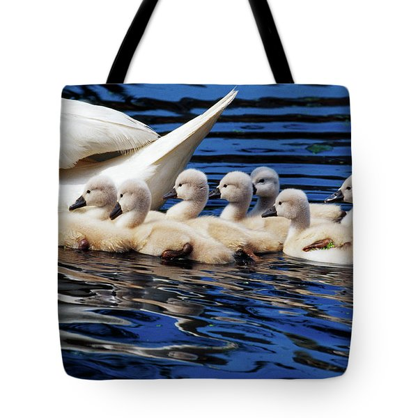 Mute Swan With Cygnets, Close Up Tote Bag