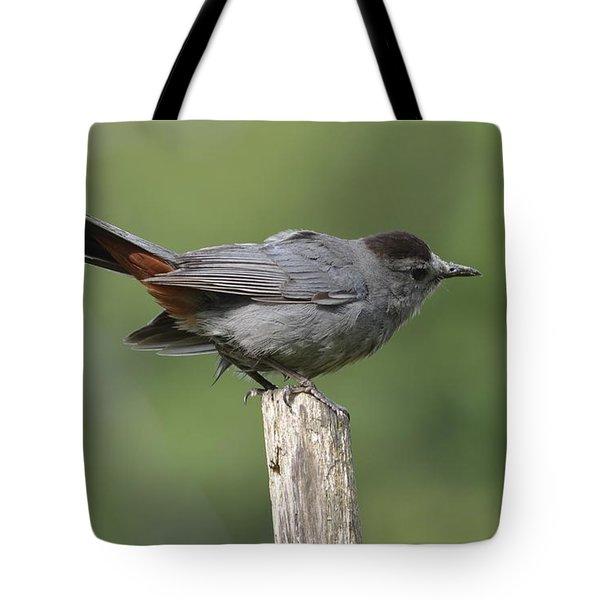 My Catbird Tote Bag