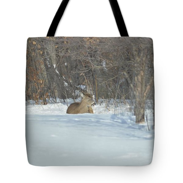 Tote Bag featuring the photograph Nap Time by Dacia Doroff