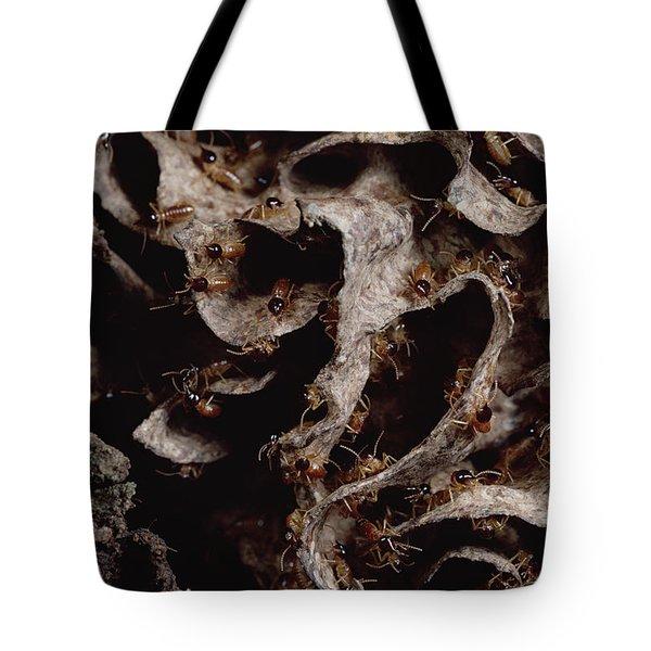 Nasute Termite Nest Amazonian Peru Tote Bag by Mark Moffett