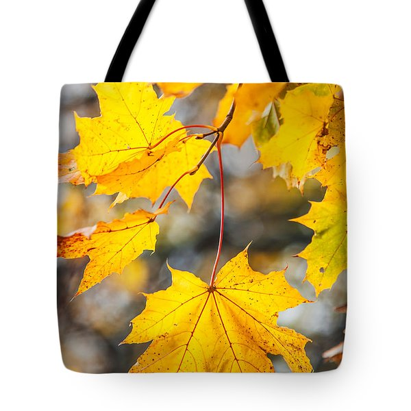 Natural Patchwork. Golden Mable Leaves Tote Bag by Jenny Rainbow