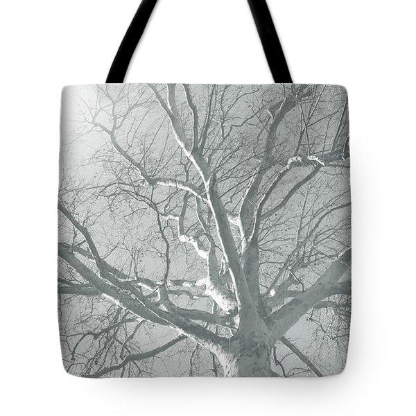 nature - art - Winter Sun  Tote Bag by Ann Powell