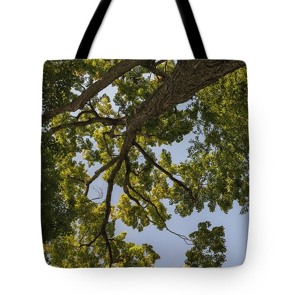Tote Bag featuring the photograph Nature Westchester County Ny by Marianne Campolongo