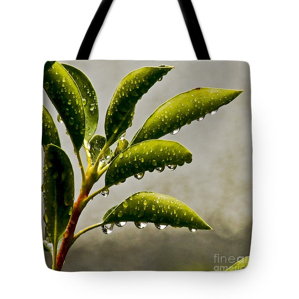Natures Teardrops Tote Bag by Carol F Austin