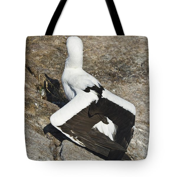Nazca Booby Thermoregulating Tote Bag