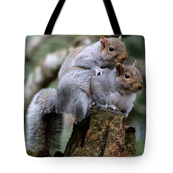 Fifty Shades Of Gray Squirrel Tote Bag by Kym Backland