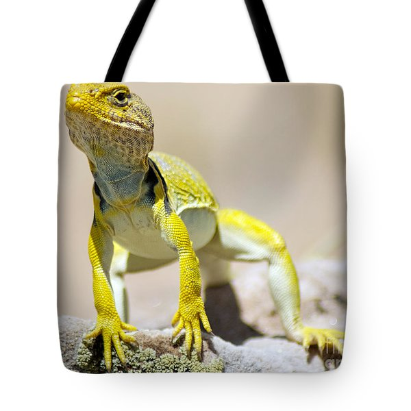 New Photographic Art Print For Sale Yellow Lizard Ghost Ranch New Mexico Tote Bag