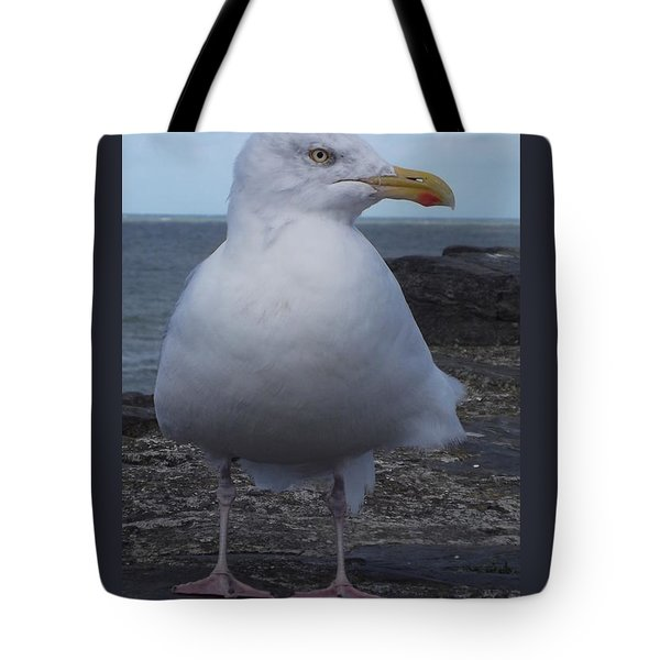 New Quay Gull  Tote Bag by John Williams