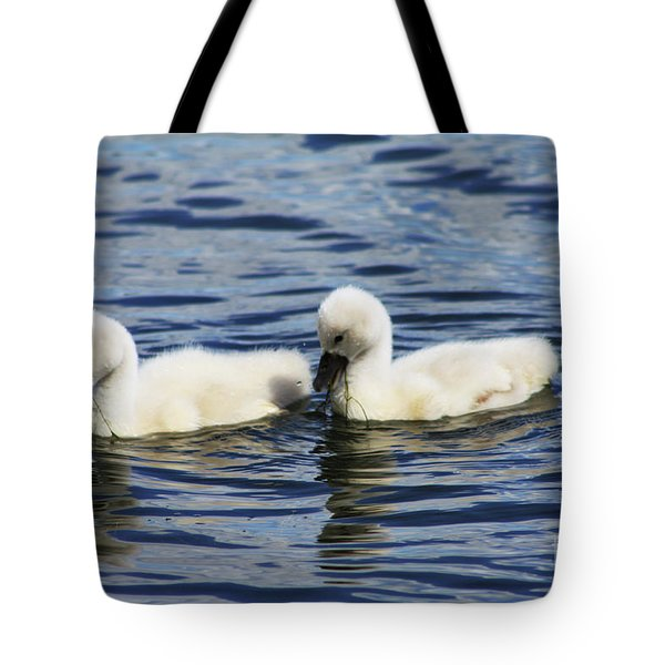 Tote Bag featuring the photograph Newborn Mute Swans by Alyce Taylor