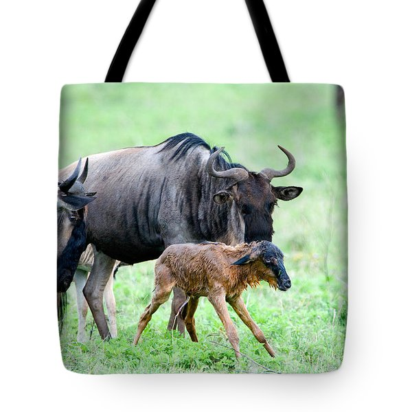 Newborn Wildebeest Calf Tote Bag