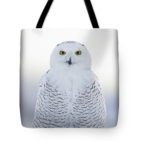 Nh Seacoast Snowy Owl  Tote Bag