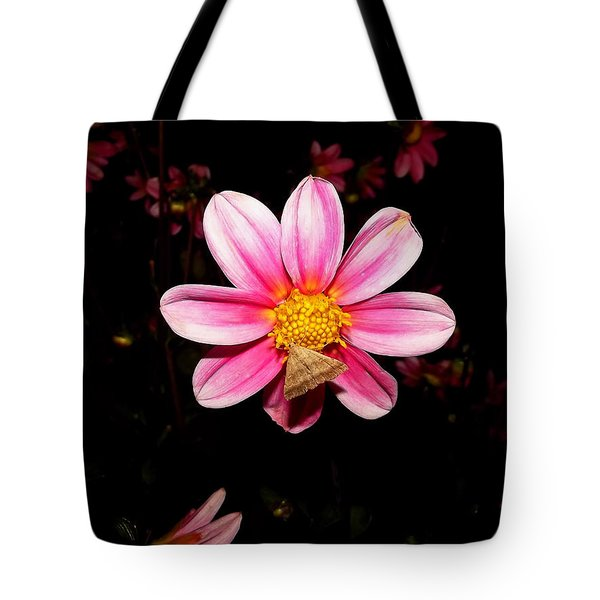 Nighttime Visitor Tote Bag